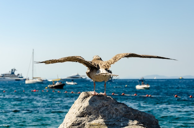 Mewy stojącej na kamieniu na tle morza tyrreńskiego z rozpostartymi skrzydłami.