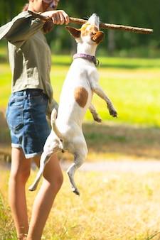 Mężczyzna bawi się ze swoim psem w kij pies w skoku pionowe zdjęcie psa jack russell terrier w...