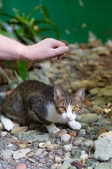 Mężczyzna chce pogłaskać nieśmiałego kota na ulicy