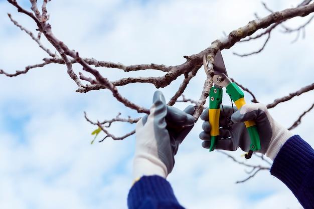 Mężczyzna cięcia suszonych gałęzi