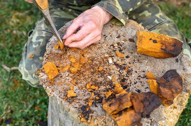 Mężczyzna czyści grzyby chaga