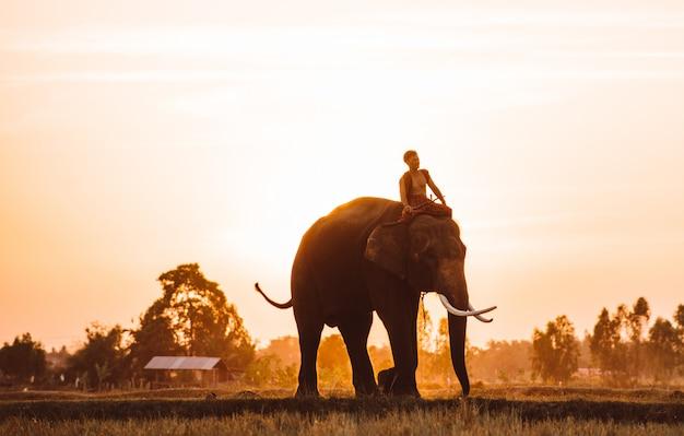 Mężczyzna i jego słoń w północnym thailand