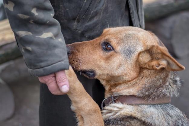 Mężczyzna i pies stojący w pobliżu bramy
