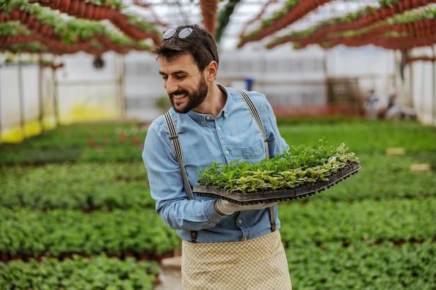 Mężczyzna idący koryta szklarni i trzymając skrzynię sadzonek.