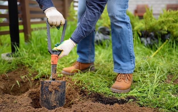 Mężczyzna kopie doły łopatą do sadzenia roślin jałowca na podwórku