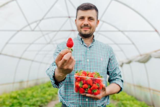 Mężczyzna młody rolnik pokazuje dojrzałą czerwoną truskawkę w rękach z przezroczystym plastikowym pudełkiem pełnym świeżych dojrzałych truskawek truskawek w pudełku w męskich rękach selektywna ostrość