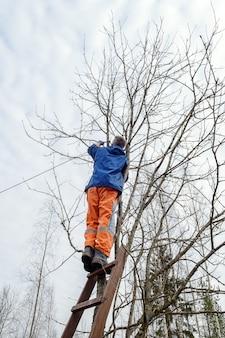 Mężczyzna na drabinie piłujący gałęzie z drzewa