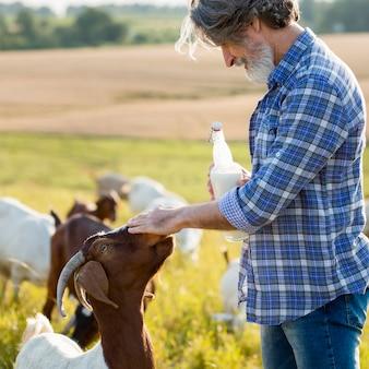 Mężczyzna obok kóz z butelką mleka