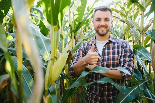 Mężczyzna ogląda pole kukurydzy i szuka szkodników. odnoszący sukcesy rolnik i agrobiznes