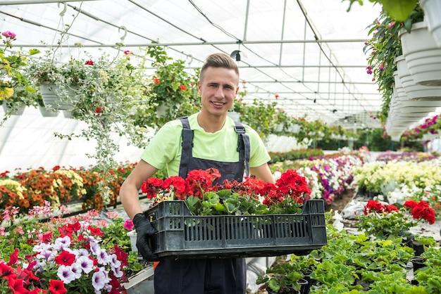 Mężczyzna ogrodnik niesie kwiaty w skrzynce w przemysłowej szklarni
