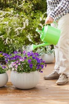 Mężczyzna ogrodnik podlewania kwiaty altówki w ogrodzie