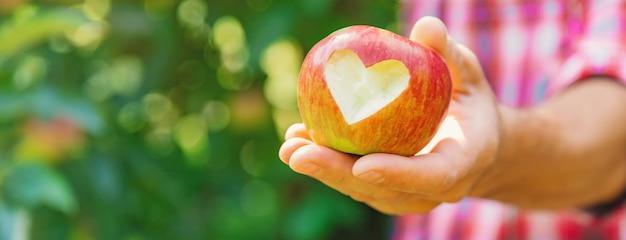 Mężczyzna ogrodnik podnosi jabłka w ogrodzie w ogrodzie. selektywne ustawianie ostrości.