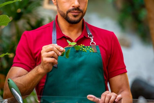 Mężczyzna ogrodnik trzyma gałąź z zielonymi jagodami w jego rękach