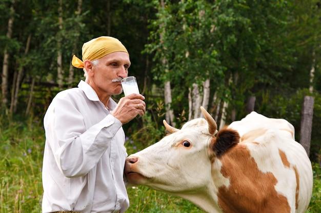 Mężczyzna pasie krowę na zielonej łące. bydło jedzą trawę. rolnik pije mleko ze szklanki. zdrowa żywność: mleko wiejskie. emeryt opiekuje się bydłem