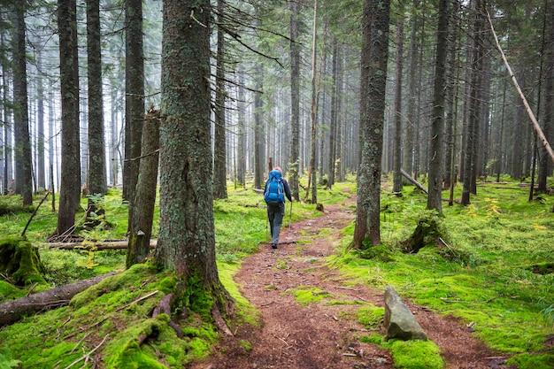 Mężczyzna piesze wycieczki zatoka szlakiem w lesie. wędrówka na łonie natury