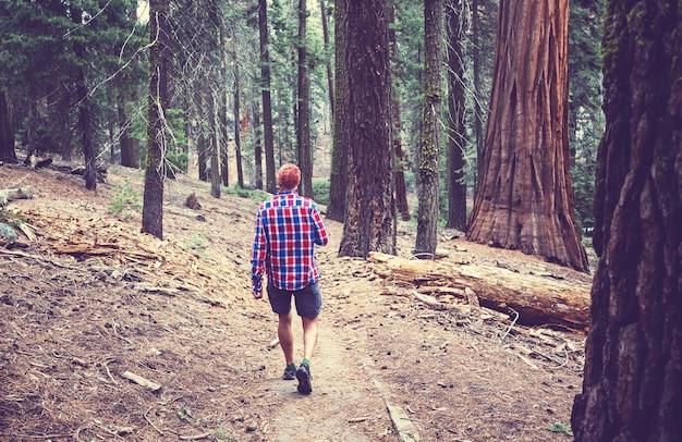 Mężczyzna piesze wycieczki zatoki szlak w lesie.