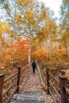 Mężczyzna podróżnik spacerujący w kolorowym lesie brzozowym na jesień