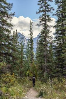 Mężczyzna podróżnik spacerujący w sosnowym lesie z górą w parku narodowym