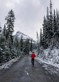 Mężczyzna podróżujący na brudnej drodze w pokrytym śniegiem lesie sosnowym na zimę w parku narodowym yoho, kanada