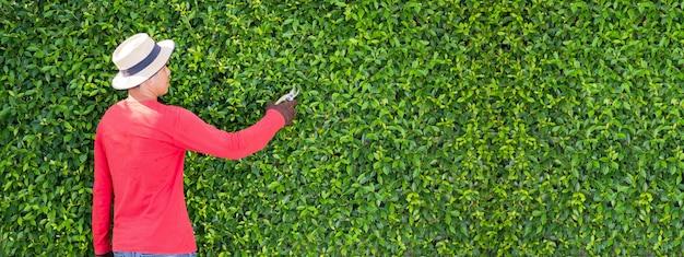 Mężczyzna pracujący w ogrodzie przycina drzewa ozdobne rano w domu