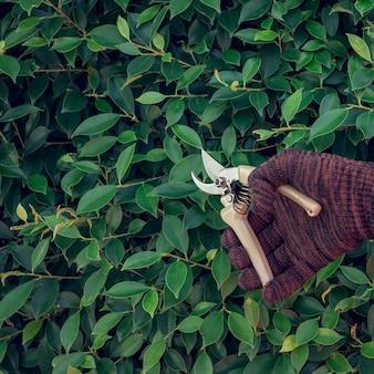 Mężczyzna przycina gałęzie w ogrodzie