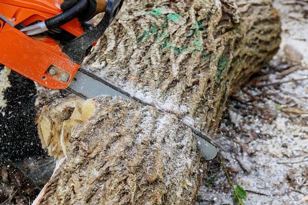 Mężczyzna Przycinający Gałęzie Drzew Pracuje W Miejskich Zakładach Użyteczności Publicznej Po Huraganie, Niszcząc Drzewa Po Burzy Premium Zdjęcia
