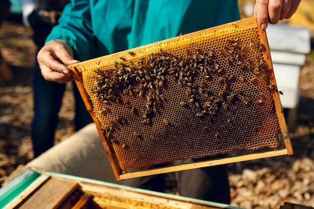 Mężczyzna pszczelarz pracuje z ula