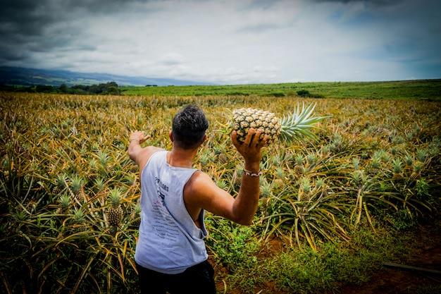 Mężczyzna rzuca ananasa w pole ananasa rolniczego