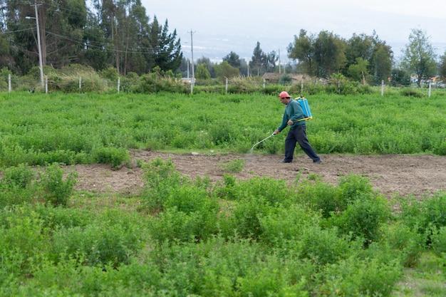 Mężczyzna spacerujący z paczką do fumigacji wśród lucerny.