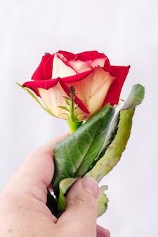 Mężczyzna trzyma różę w ręku.