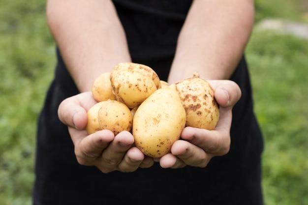 Mężczyzna trzyma świeże ziemniaki