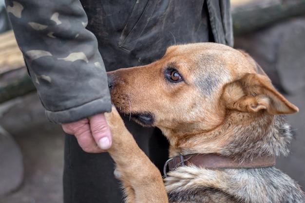 Mężczyzna trzyma w dłoni łapę psa, pies ufa człowiekowi, osoba tresuje psa