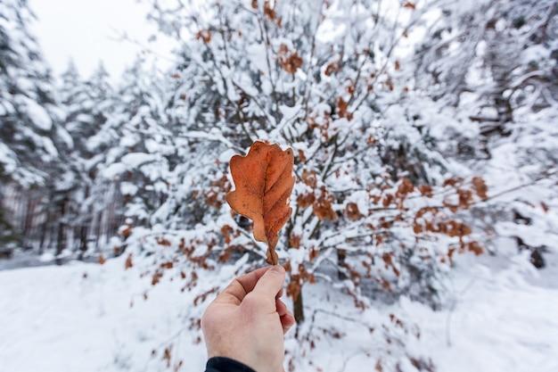 Mężczyzna trzyma w dłoni suchy liść dębu w kolorze czerwonym na tle zaśnieżonego lasu