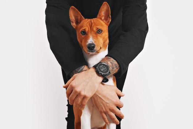 Mężczyzna w czarnym ubraniu chroni swojego pięknego czerwono-białego psa rasy basenji z poruszoną twarzą przed jakimkolwiek niebezpieczeństwem na białym tle