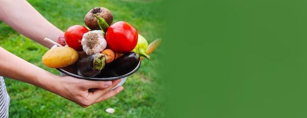 Mężczyzna w ogrodzie z warzywami w dłoniach. selektywne skupienie. natura.