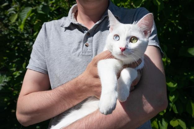 Mężczyzna w szarej koszulce trzyma białego kota z niebieskimi i zielonymi oczami, lato na świeżym powietrzu.
