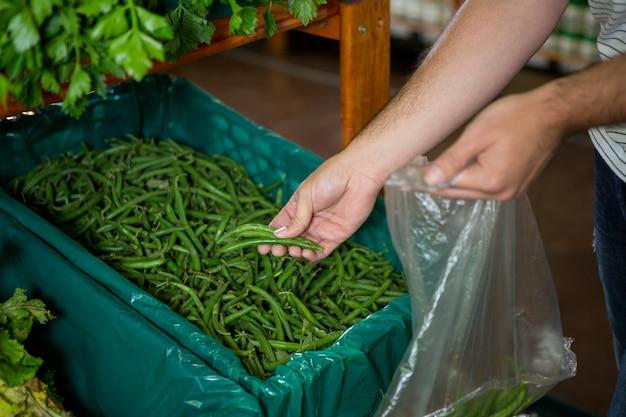 Mężczyzna wybiera fasolkę szparagową w organicznie sekci