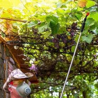 Mężczyzna z pistoletem natryskowym nawadnia winorośl, aby zniszczyć pasożyty owadów