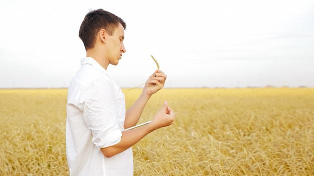Mężczyzna z tabletem i kłosem dojrzałej pszenicy na polu