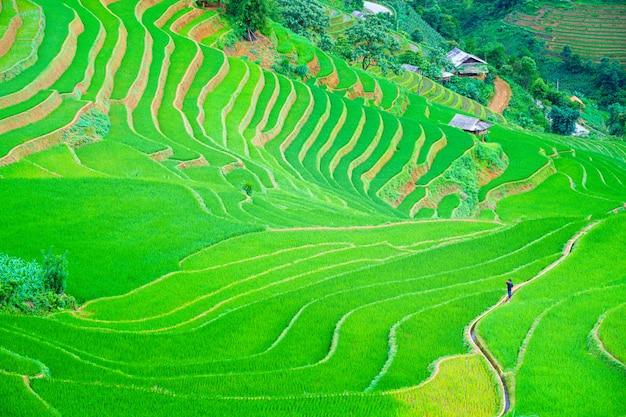 Mężczyznę idącego w centrum piękne tarasowe pole ryżowe i górski krajobraz w mu cang chai