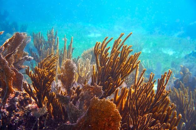 Mezoamerykańska bariera wielka rafa majów