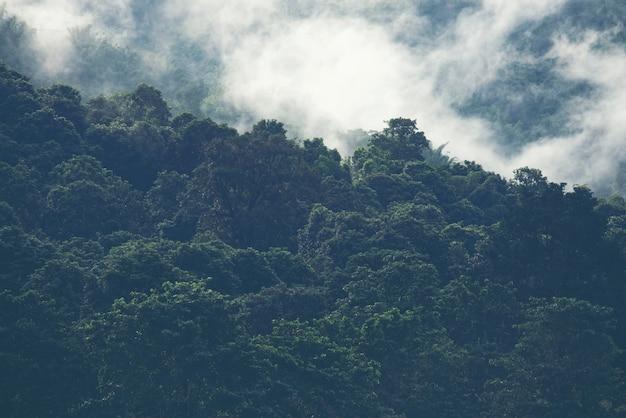 Mgła na górze w tropikalnym lesie tajlandia.