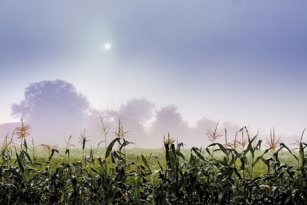 Mgła na polu gospodarstwa. słońce patrzy przez gęstą mgłę