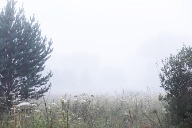 Mgła na polu. wieczorna przyroda latem z białą mgłą.