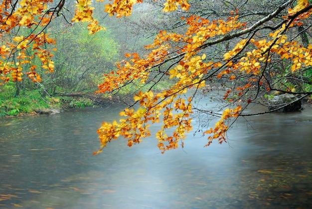 Mgła na rzece baias jesienią. kraj basków. hiszpania