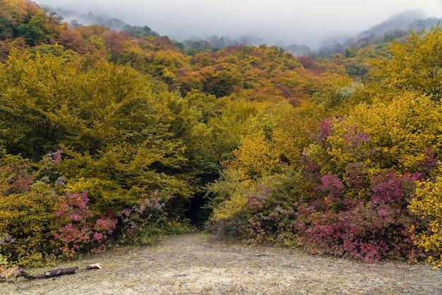 Mgła nad górskim jesiennym lasem