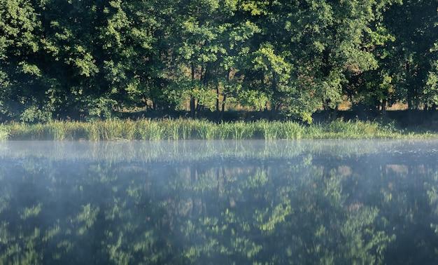 Mgła nad rzeką o świcie w lesie. drzewa nad rzeką o świcie. gałęzie drzew nad wodą we mgle.