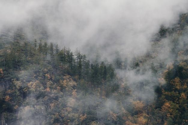 Mgła nad zboczem góry, oszałamiający krajobraz późną jesienią