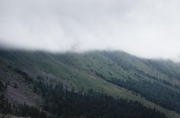 Mgła pokrywająca górskie lasy. zielone, klimatyczne góry
