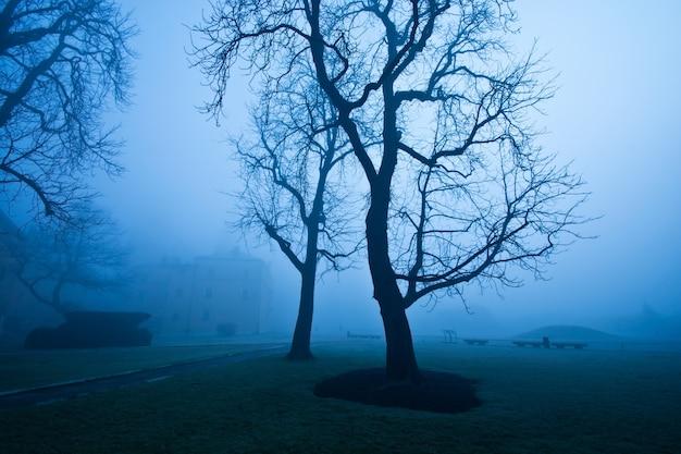 Mgła rano w parku miejskim.
